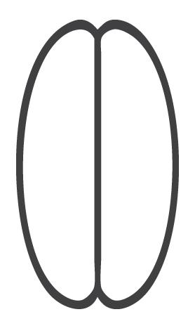 cascara design concept image